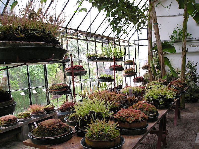Carnivorous Plants at the Botanica Garden in Padua