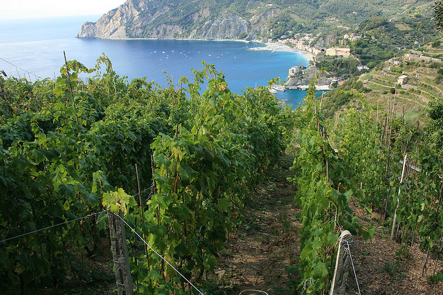 Vineyards in Cinque Terre