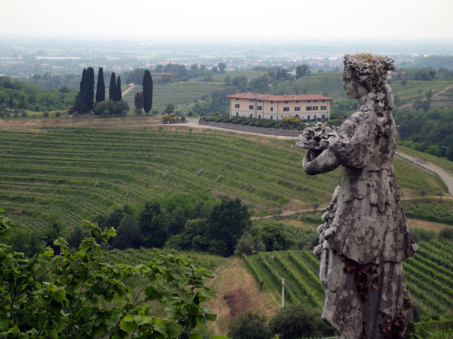 Vineyards of Friuli Venezia Giulia.