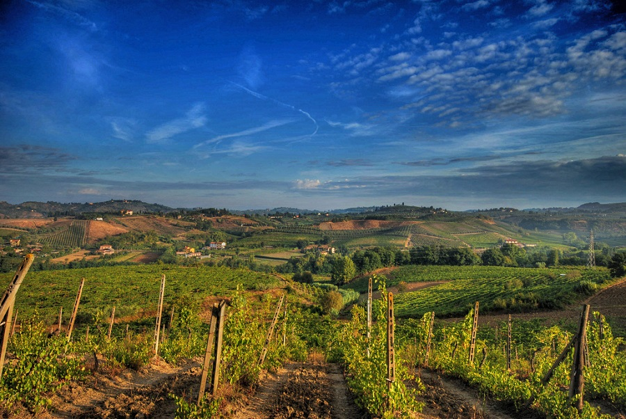 Vineyards in the Chianti area