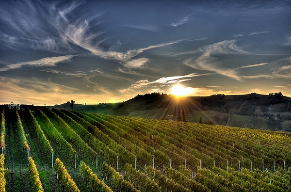 Sunset over the vineyards in the Langhe region, a Unesco World Heritage Site