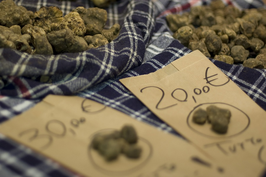 The exhibition of white truffle in San Miniato
