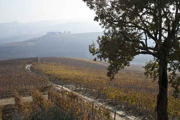 Autumn in Barolo, home to a great Italian red wine