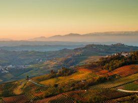 Piedmont: Le Langhe