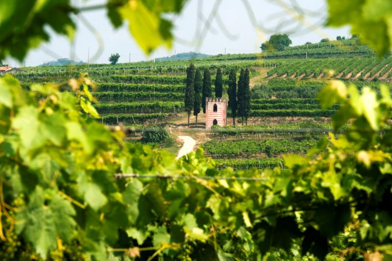 Vineyards in Valpolicella, the region of the Amarone wine