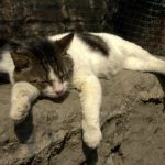 The Abandoned Cats of Rome