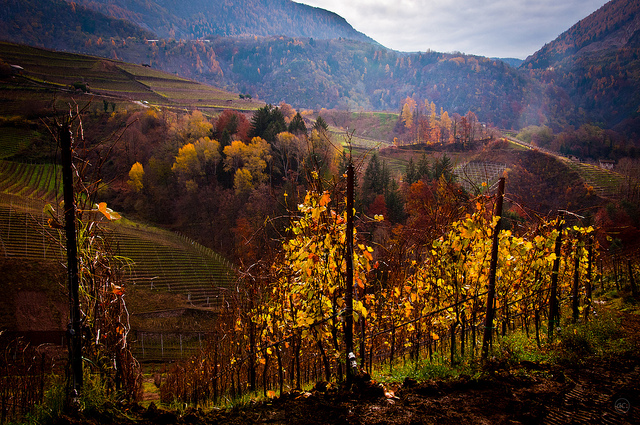 Touring Italy's Vineyards