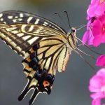 Italian Butterfly Garden