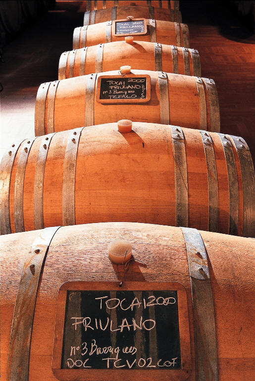Wine barrels of Friuli Wine
