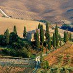 The Italian Cypress Tree