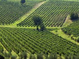 Basilicata's Love of Wine and Food