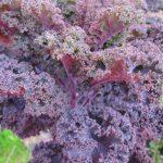 Kale Italian style