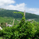 The Hills of  Prosecco and the issues UNESCO ignored