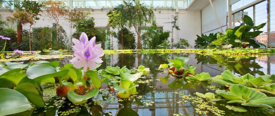 piante fiore giardino botanico