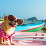 5 Tips For Traveling with Pets to Italy