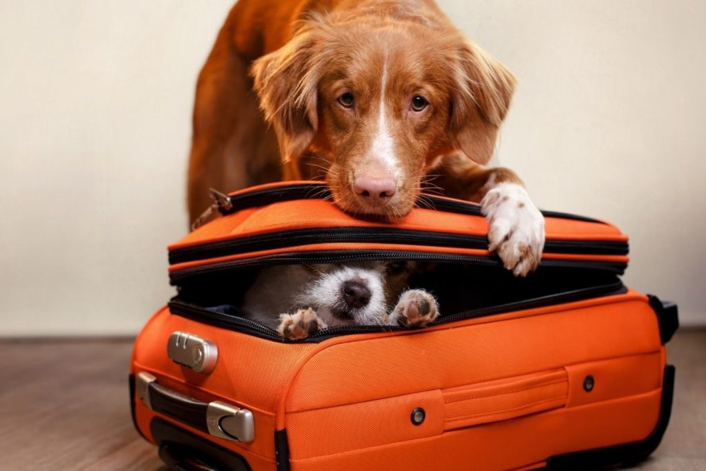 traveling with pet to italy