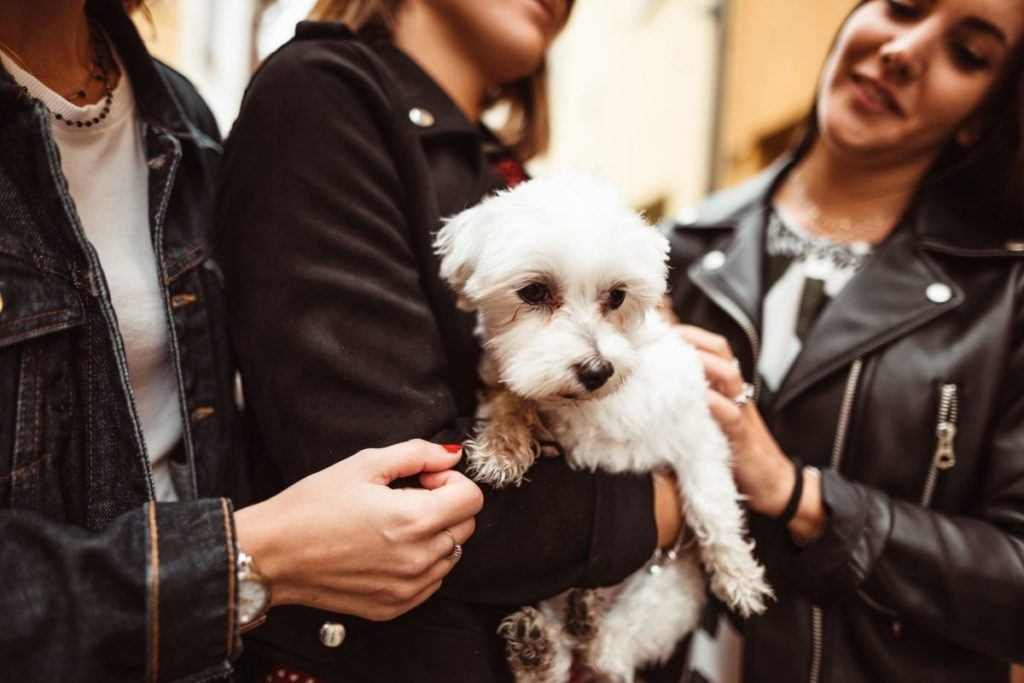 adopt a dog in italy